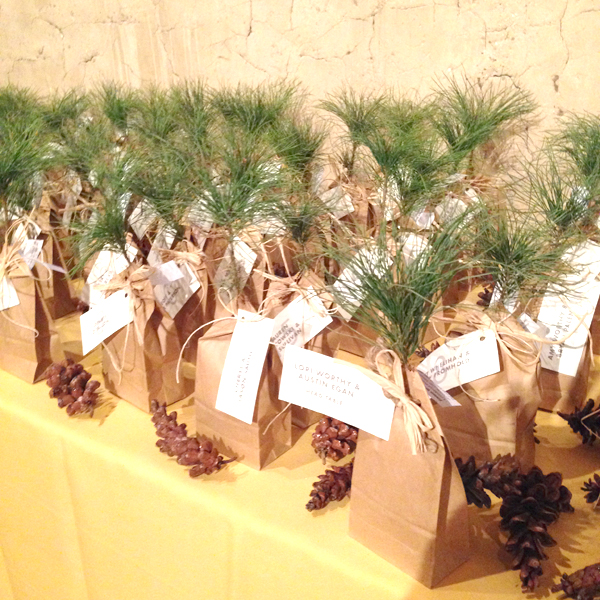 baby tree wedding favors