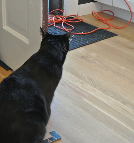 """Trixie """"supervised"""" the tile cutting from inside"""