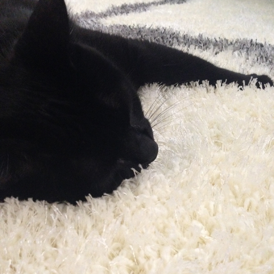 Trixie on our new rug