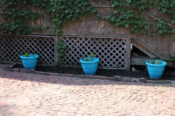 back yard, Burritos & Bubbly