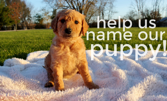 help us name our puppy, contest + giveaway, Burritos and Bubbly