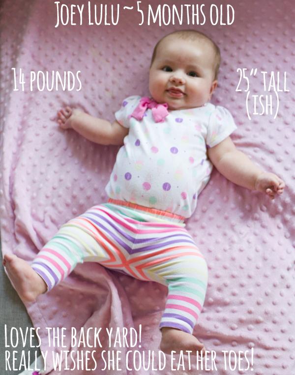 Joey Lulu, 5 months old